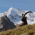 ibex hunting,hunting spain,hunting guides,hunting outfitters