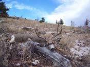 hunting guides,hunting outfitters,mule deer hunting,hunting mule deer