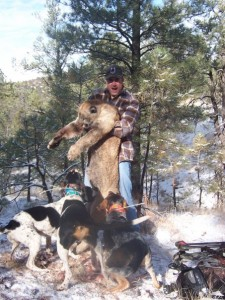 hunting mountain lions,mountain lion hunts,hunting guides,hunting outfitters