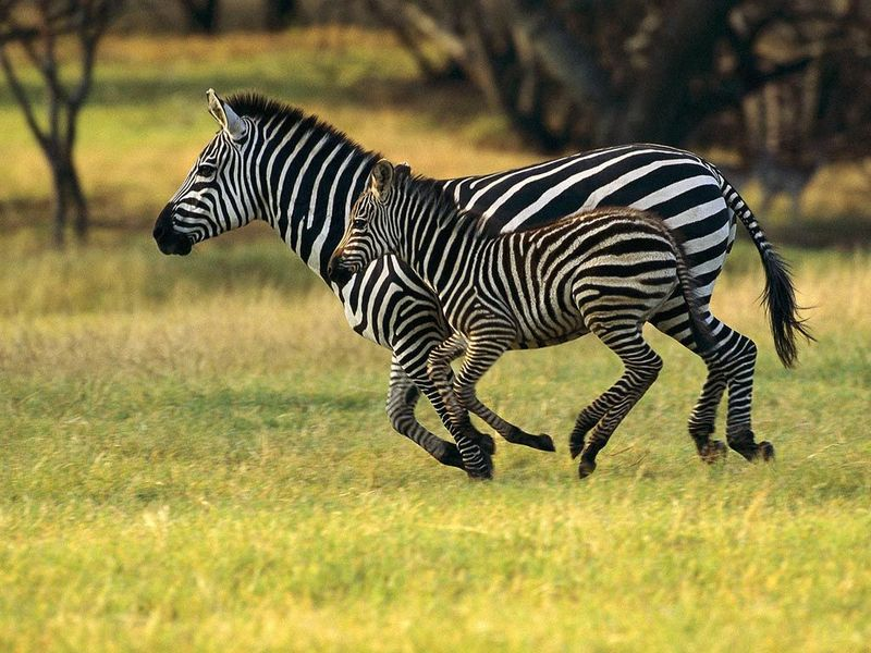 african safaris,hunting africa,hunting guides,hunting outfitters