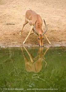 african safari,hunting africa,hunting guides,hunting outfitters