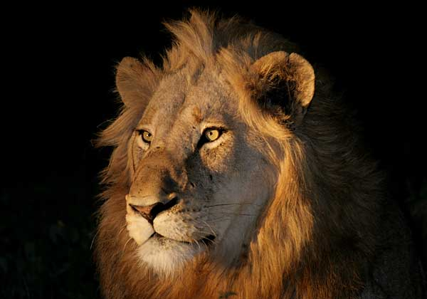african safaris, hunting africa, hunting guides,hunting outfitters