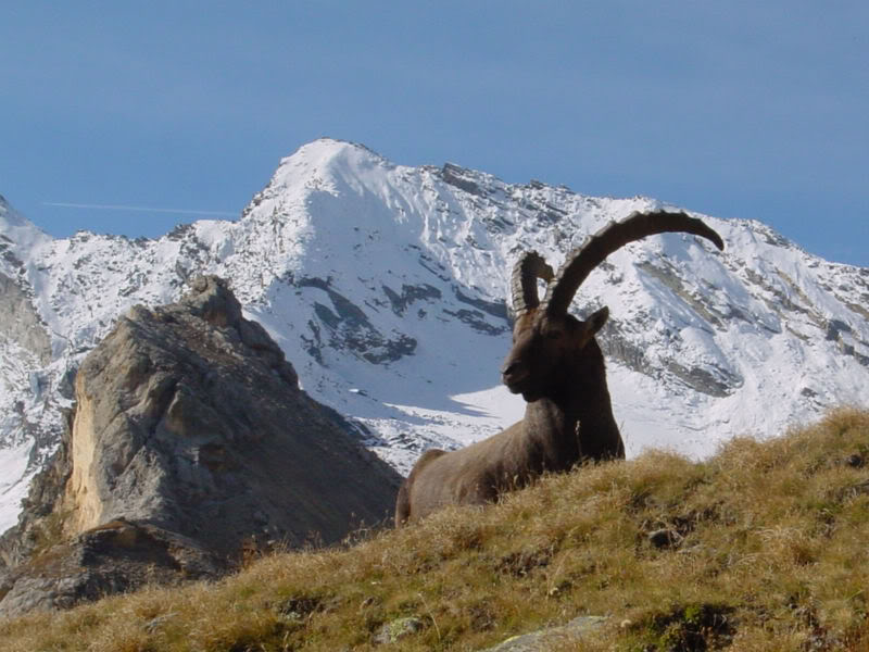 hunting guides,hunting outfitters,ibex hunting,hunting spain